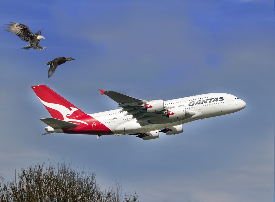 qantas and the government
